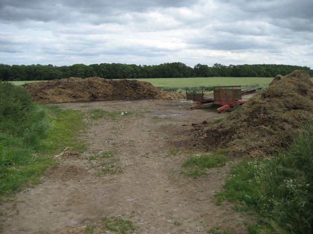 Festering Piles near Manor House Farm