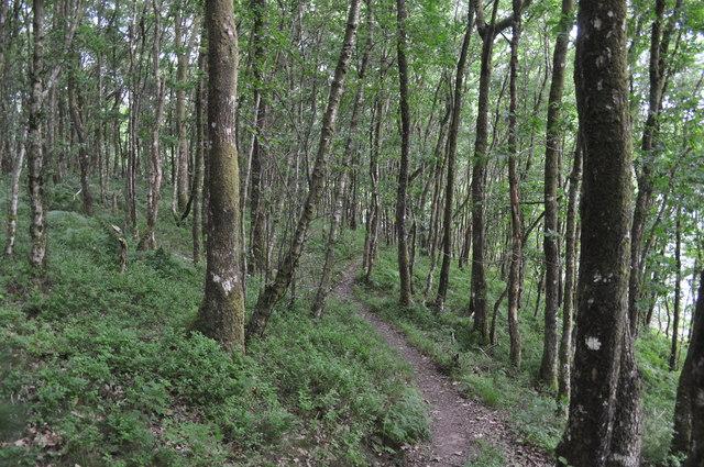 Exmoor : Wimbleball Lake at West Hill Wood