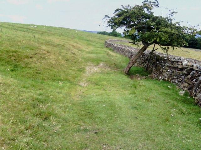 Footpath through Cote Pasture