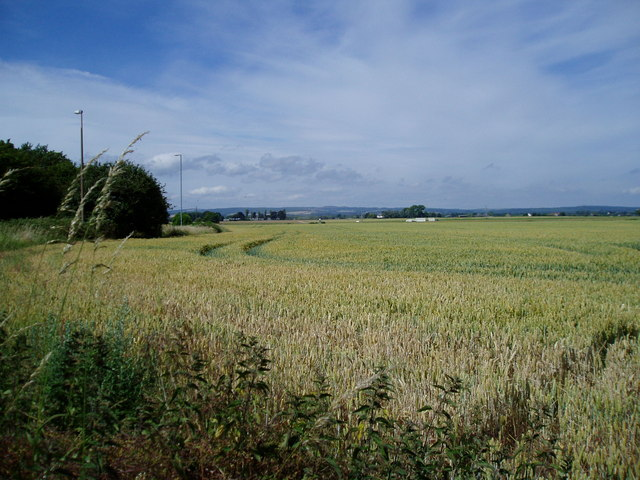 Wheat field (2)