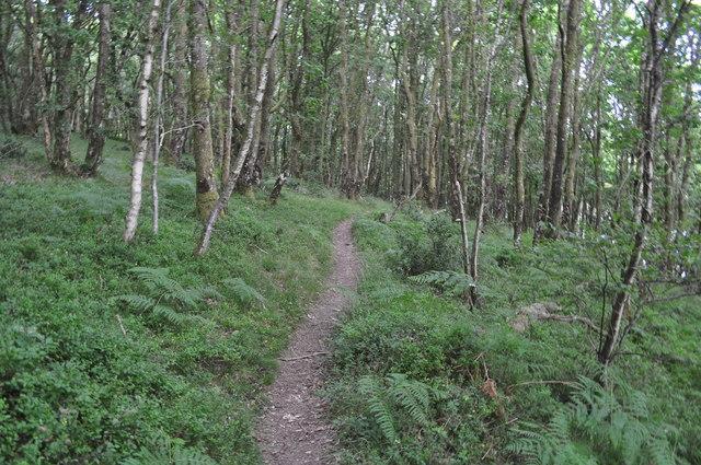 Exmoor : West Hill Woodland & Footpath