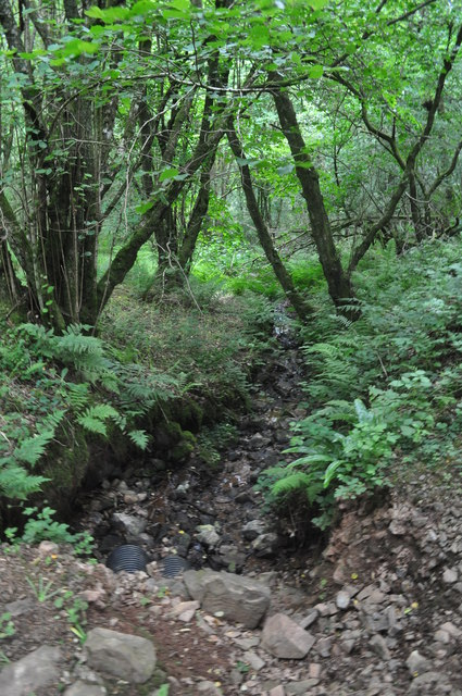 Exmoor : West Hill Woodland - Water Trench