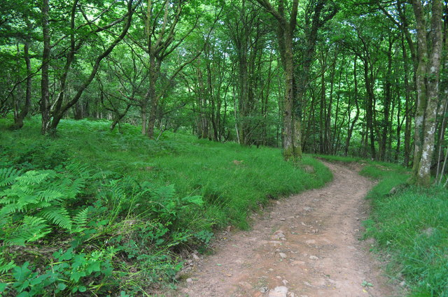 Exmoor : West Hill Woodland Footpath