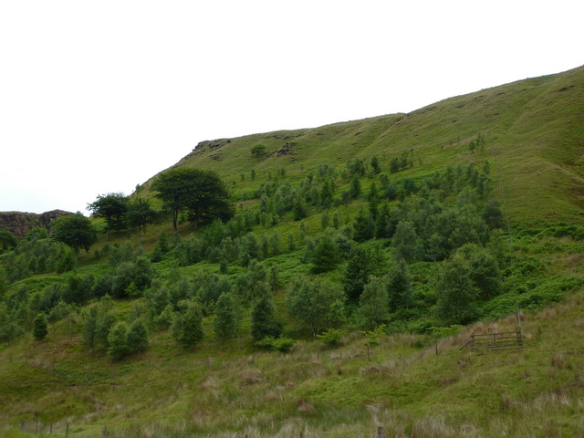 Ratten Clough Wood