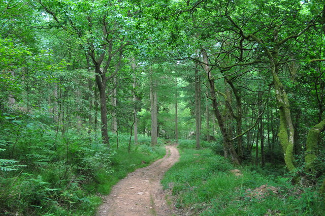 Exmoor : West Hill Woodland Footpath