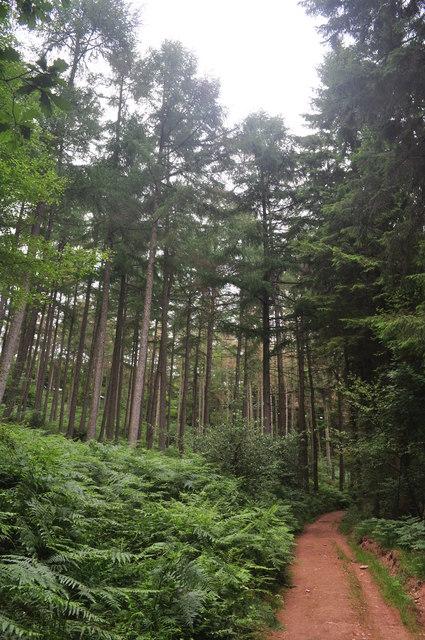 Exmoor : West Hill Woodland & Path