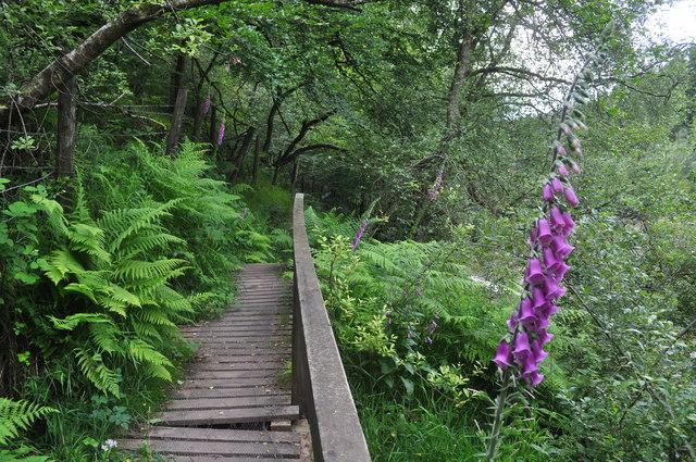 Exmoor : Wimbleball Lake Footpath