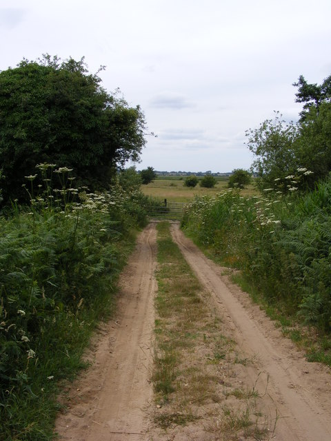 Track to Blundeston Marshes