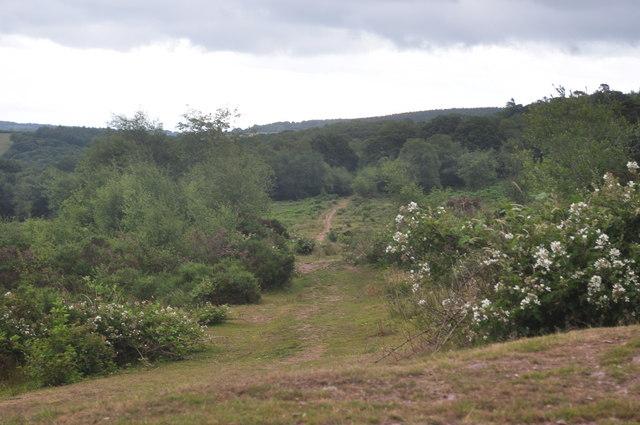 Exmoor : Haddon Hill Path