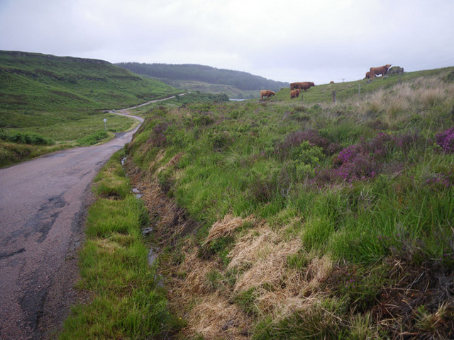 Highland cattle grazing along the B8073 Road