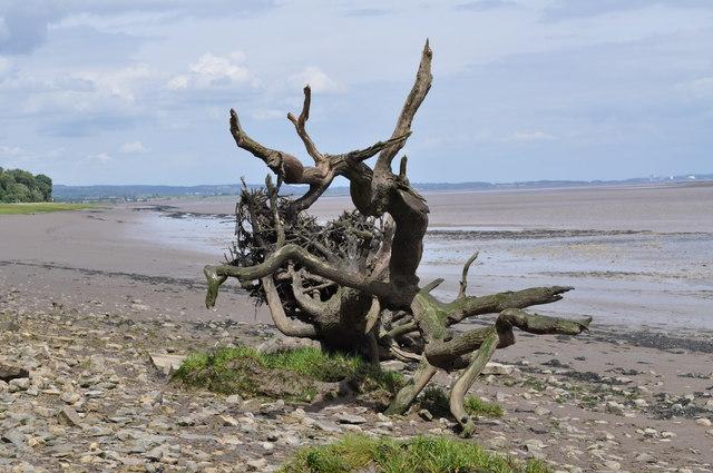 A piece of driftwood on Sedbury beach
