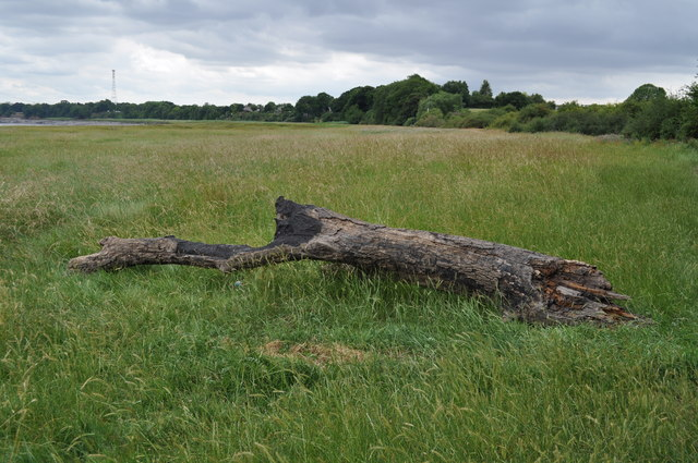 A piece of driftwood at estuary, near Sedbury