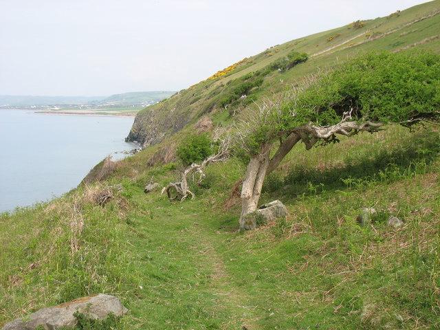 On the Ceredigion Coast Path, north-east of Aberarth