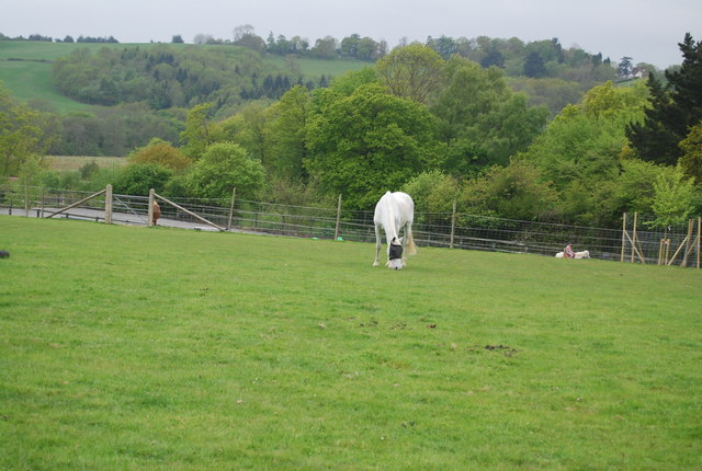 A grazing horse near Tanyard
