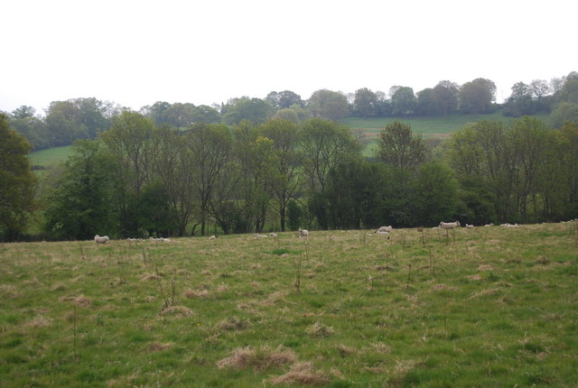 Sheep near Horsted House Farm