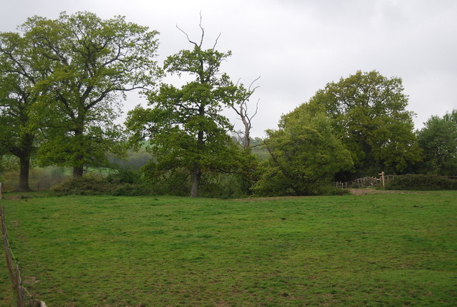 Trees west of the Bluebell  Line