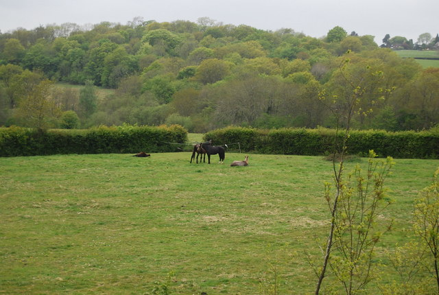 Horses south of Horsted House Farm
