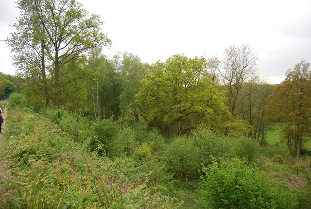 Woodland by the Bluebell Railway