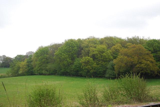 Cragg Wood