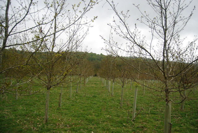 Young trees by the Bluebell Railway