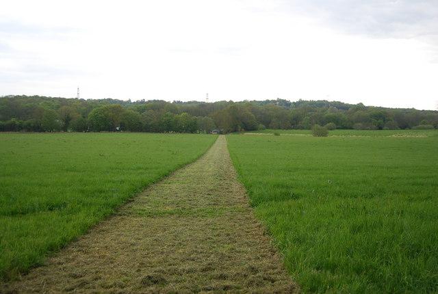 A strip cut across a field near Wapsbourne Wood