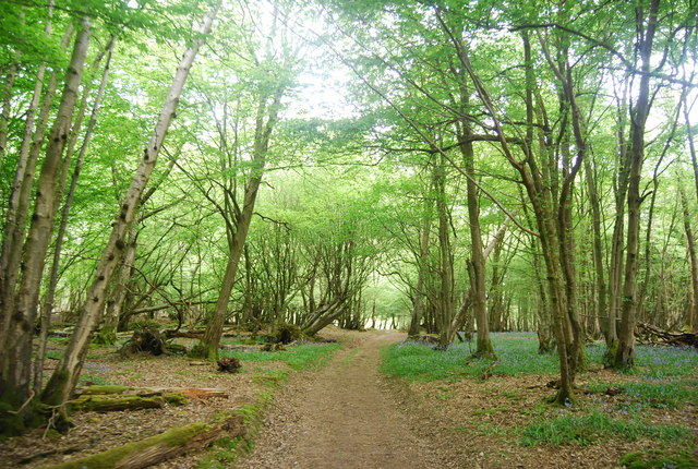 Sussex Ouse Valley Path, Wapsbourne Wood