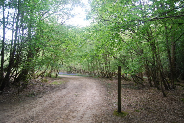 Sussex Ouse Valley Way, Wapsbourne Wood