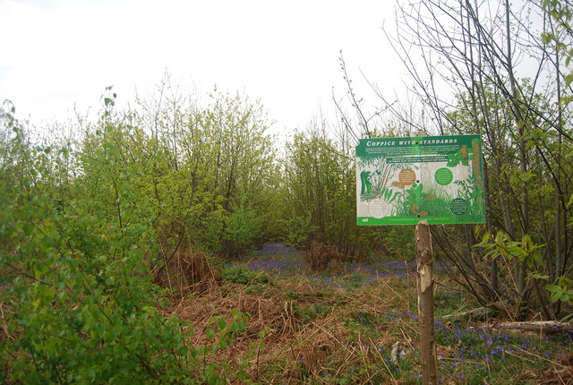 Coppicing with standards, Wapsbourne Wood