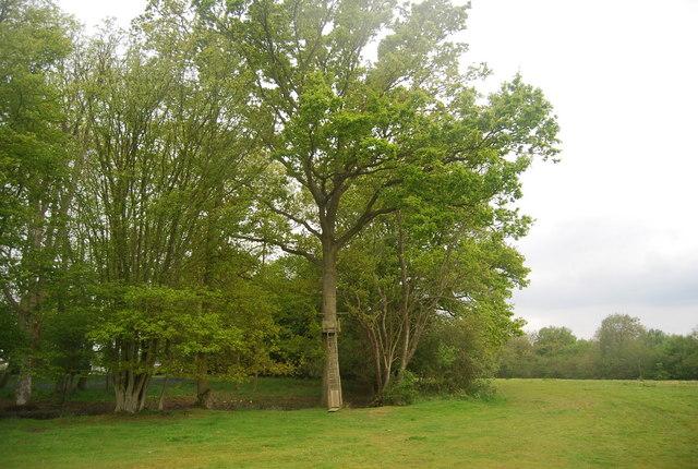 Coppiced trees around a pond, Wapsbourne Wood