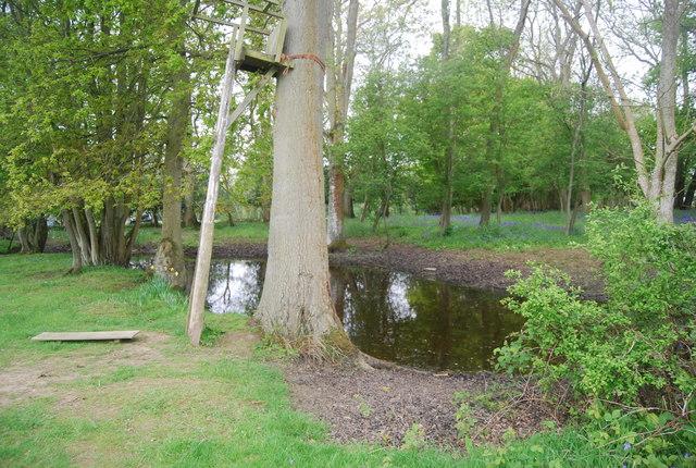 Wooded pond, Wapsbourne Wood