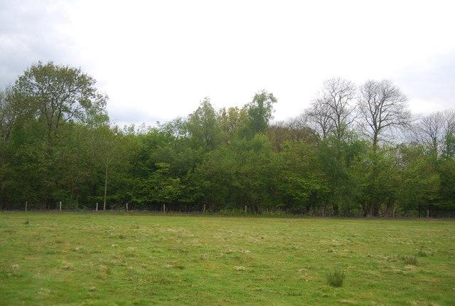 The edge of Wapsbourne Wood