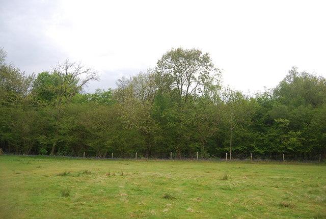 Wapsbourne Wood