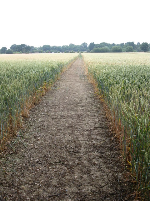 Path in the wheat field