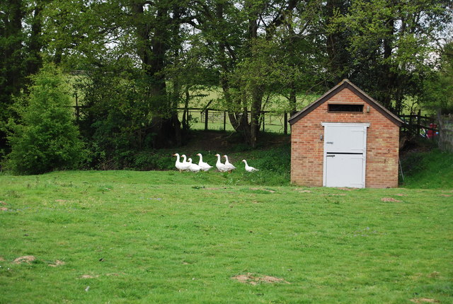 Geese and a geese shed!