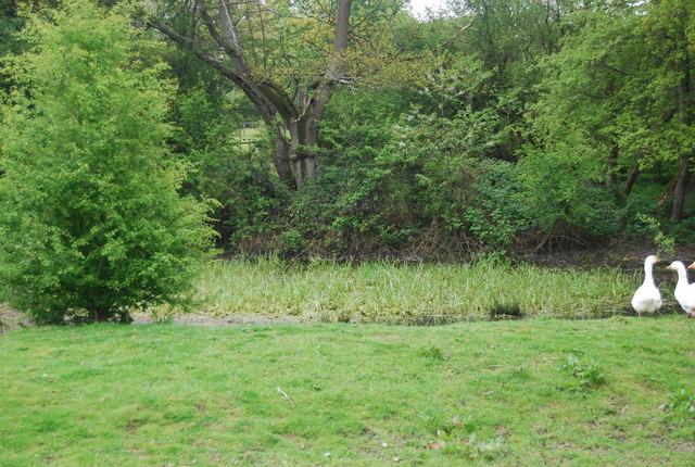 Pond near Bacon Farm