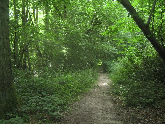 Footpath in Kemberland Wood