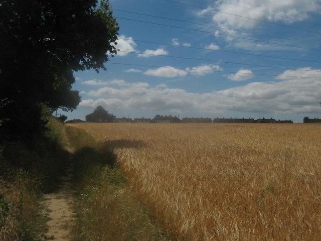 Footpath beside Kemberland Wood