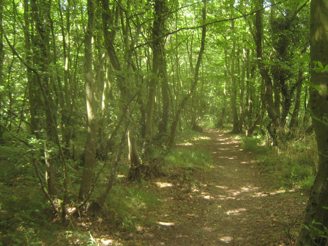 Footpath in Hoades Wood