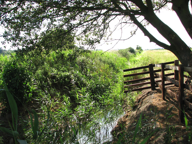 Drainage ditch south of Holkham Gap
