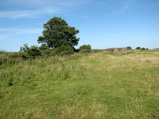 Overgrown railway trackbed