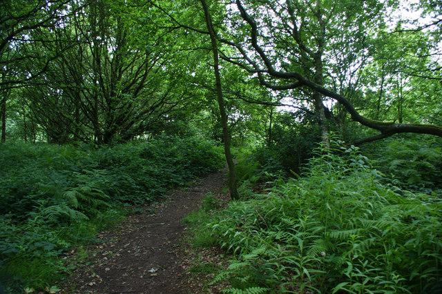 The path to Ashurst Beacon