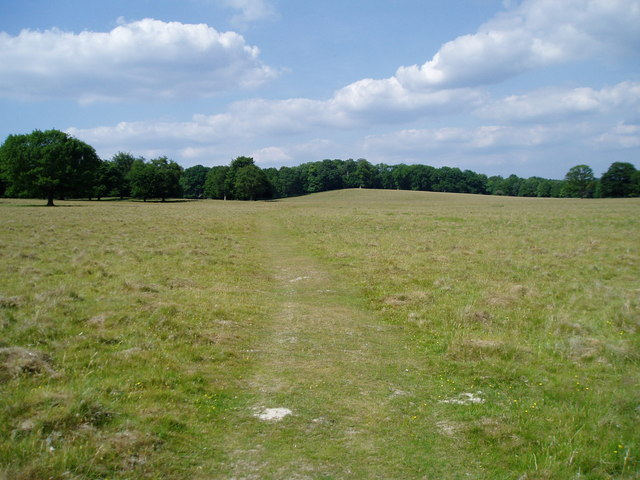 Path through Petworth Park