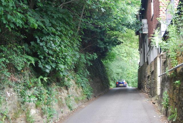 Tea Garden Lane