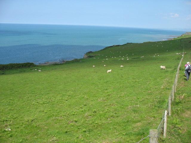 Field south of Mynachdy'r-graig farm