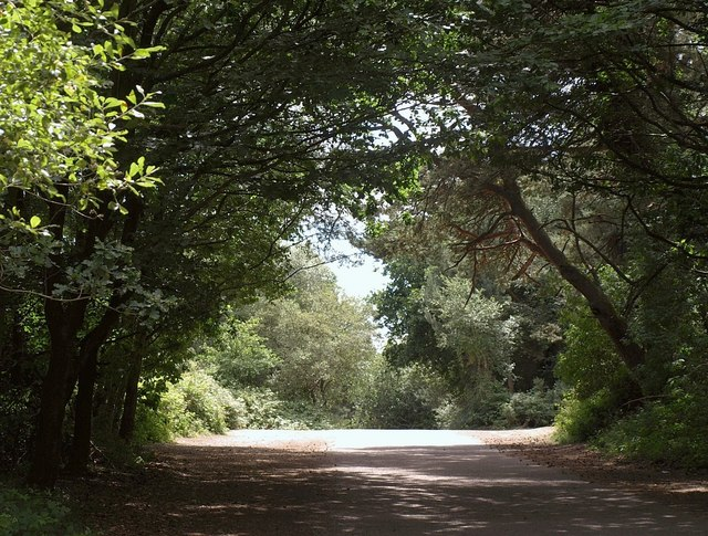 Road on East Budleigh Common