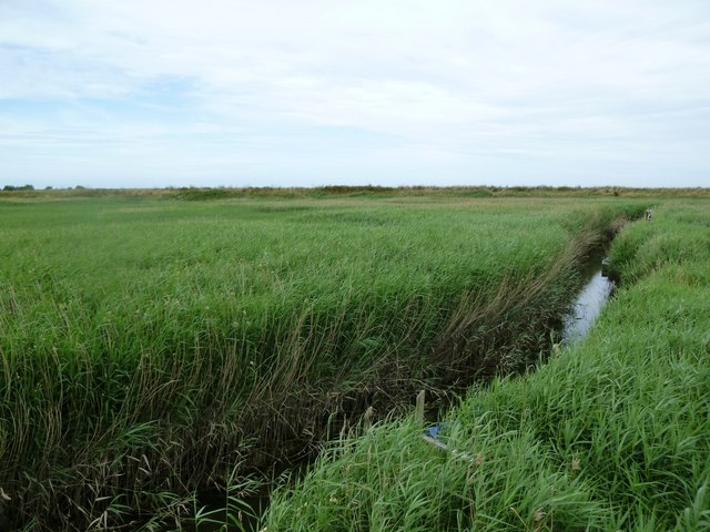 Cley: reed beds largely obscuring a small creek near the windmill