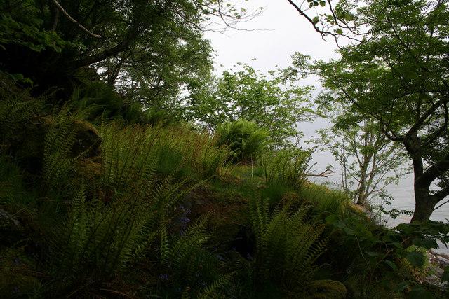 Coastal hazel woodland with ferns