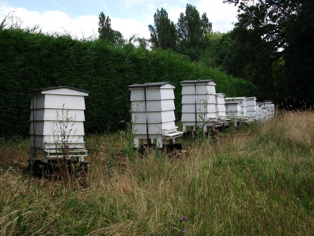 Beehives on bank opposite the Butchers Arms