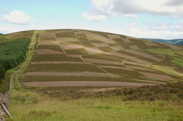 A chequerboard hillside, Clog Knowe