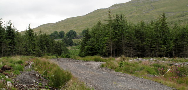 Forestry Road North-east of Amnodd-bwll